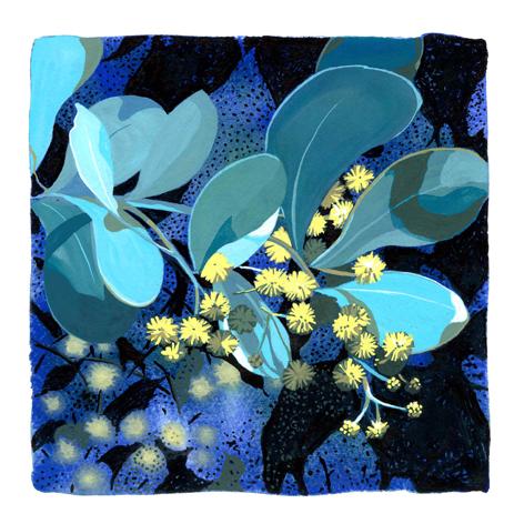 Buchan-blue-wattle-georgie-daphne